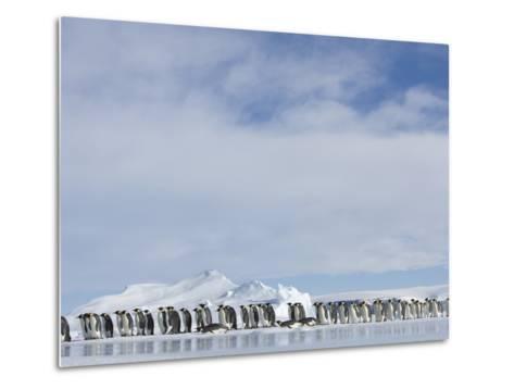 Row of Emperor Penguins in Antarctica-Paul Souders-Metal Print
