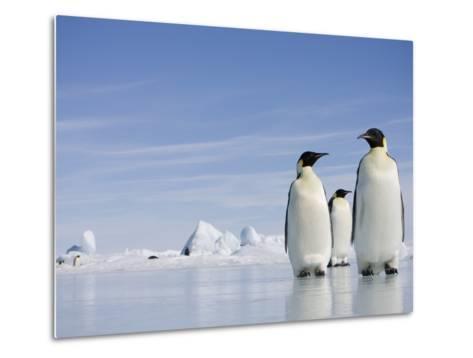 Emperor Penguins in Antarctica-Paul Souders-Metal Print