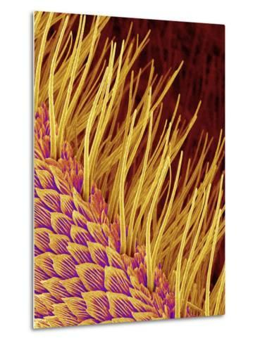 Sensory Hairs on a Moth Antenna-Micro Discovery-Metal Print
