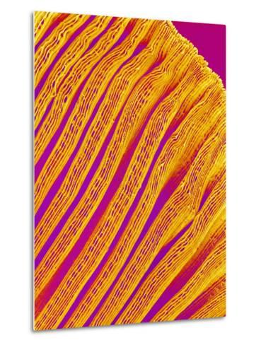 Freshwater Clam Gills-Micro Discovery-Metal Print