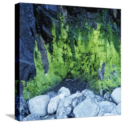 Algae Growing on Rock Cliff-Micha Pawlitzki-Stretched Canvas Print
