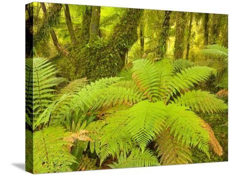 Forest on West Coast of New Zealand's South Island-John Eastcott & Yva Momatiuk-Stretched Canvas Print