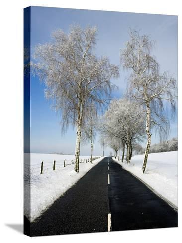 Birch Trees on Side of Road in Winter-Frank Lukasseck-Stretched Canvas Print