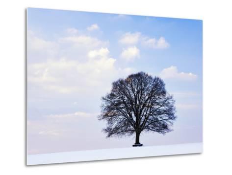 Oak Tree in Winter-Frank Lukasseck-Metal Print