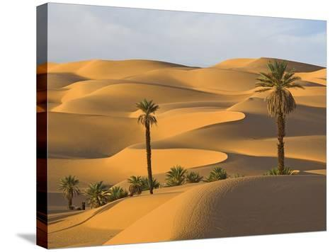 Palm Trees in Desert-Frank Lukasseck-Stretched Canvas Print