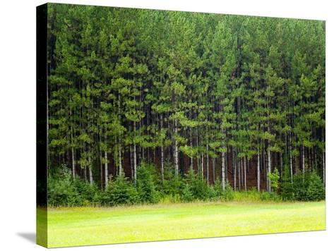 Forest Edge-Jim Craigmyle-Stretched Canvas Print