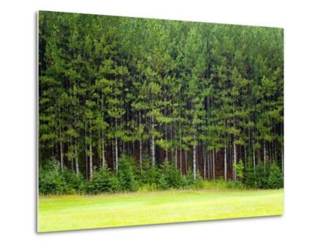 Forest Edge-Jim Craigmyle-Metal Print