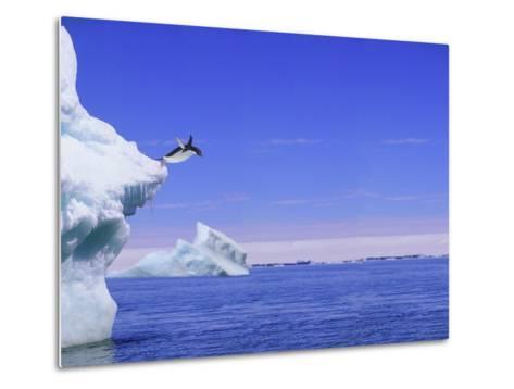 Adelie Penguin Jumping From Iceberg--Metal Print