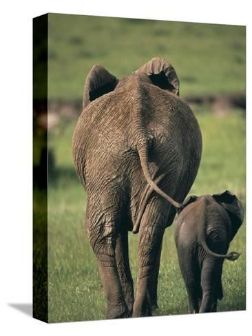 Adult Elephant and Baby--Stretched Canvas Print