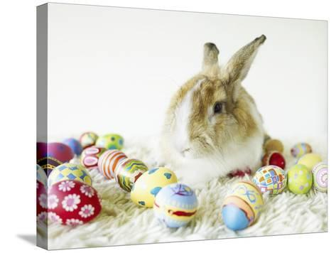 Bunny Rabbit Sitting Among Easter Eggs--Stretched Canvas Print
