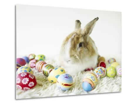 Bunny Rabbit Sitting Among Easter Eggs--Metal Print