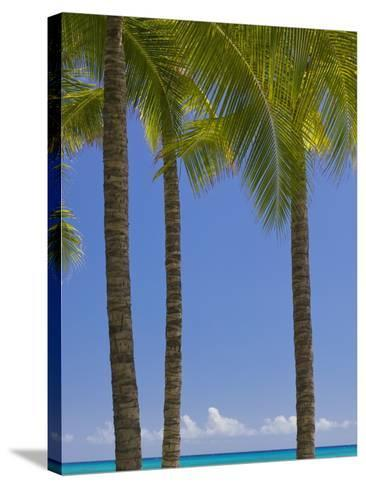 Palm Trees on Beach-Jonathan Hicks-Stretched Canvas Print