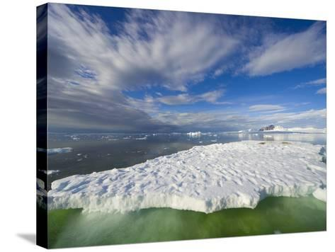 Crabeater Seals on Ice Floe at Holtedehl Bay-John Eastcott & Yva Momatiuk-Stretched Canvas Print
