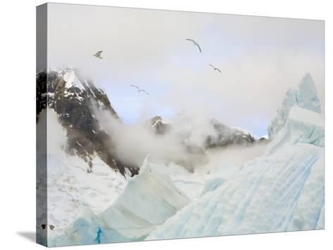 Gulls Flying Above Stranded Icebergs at Boothe Island-John Eastcott & Yva Momatiuk-Stretched Canvas Print