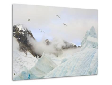 Gulls Flying Above Stranded Icebergs at Boothe Island-John Eastcott & Yva Momatiuk-Metal Print