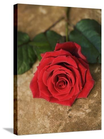 Single Red Rose on Stone Floor-Clive Nichols-Stretched Canvas Print