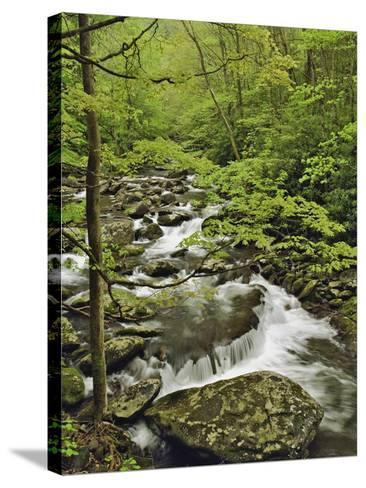 Middle Prong of the Little Pigeon River Cascading over Rocks-William Manning-Stretched Canvas Print