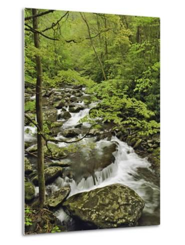 Middle Prong of the Little Pigeon River Cascading over Rocks-William Manning-Metal Print