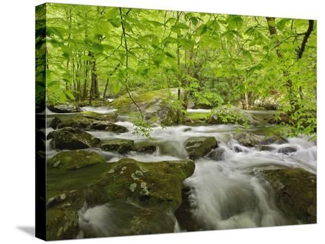 Middle Prong of the Little River-William Manning-Stretched Canvas Print