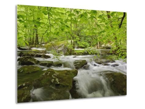 Middle Prong of the Little River-William Manning-Metal Print