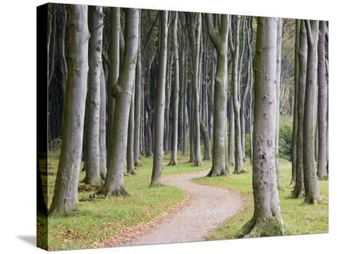 Beech Forest on the Baltic Coast-Frank Lukasseck-Stretched Canvas Print