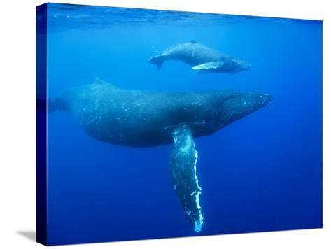Humpback Whale Cow and Calf Underwater-Paul Souders-Stretched Canvas Print