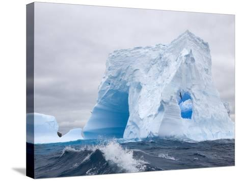 Blue Iceberg Sculpted by Waves and Southern Giant Petrel in Flight-John Eastcott & Yva Momatiuk-Stretched Canvas Print