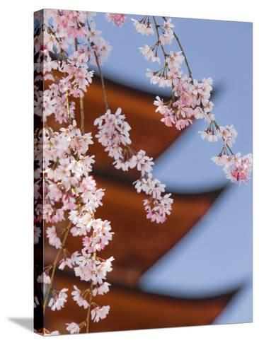 Cherry Blossoms at Itsukushima Jinja Shrine-Rudy Sulgan-Stretched Canvas Print