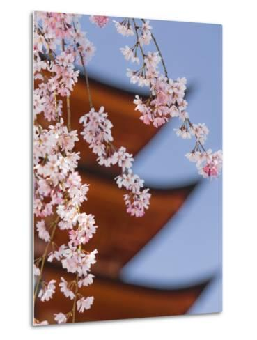 Cherry Blossoms at Itsukushima Jinja Shrine-Rudy Sulgan-Metal Print