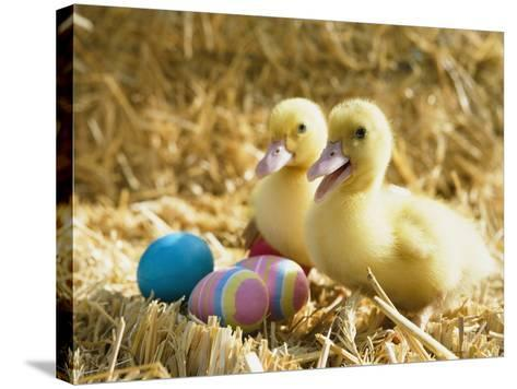 Pair of ducklings with Easter eggs-Ada Summer-Stretched Canvas Print