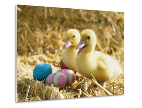 Pair of ducklings with Easter eggs-Ada Summer-Metal Print