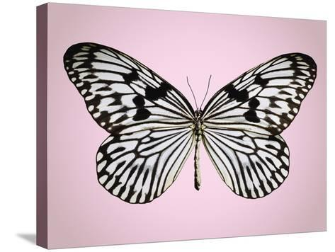 Paper-kite butterfly--Stretched Canvas Print