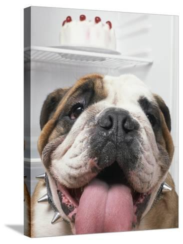 Bulldog in front of refrigerator-Ada Summer-Stretched Canvas Print