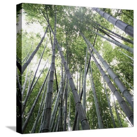 Bamboo Forest-Micha Pawlitzki-Stretched Canvas Print