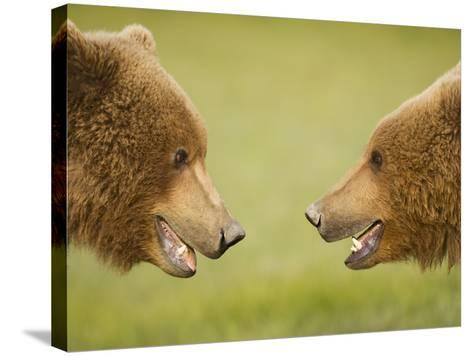 Brown Bears Facing Off at Hallo Bay-Paul Souders-Stretched Canvas Print