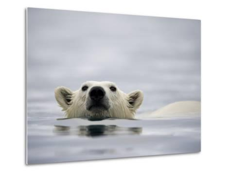 Swimming Polar Bear at Half Moon Island in Svalbard-Paul Souders-Metal Print