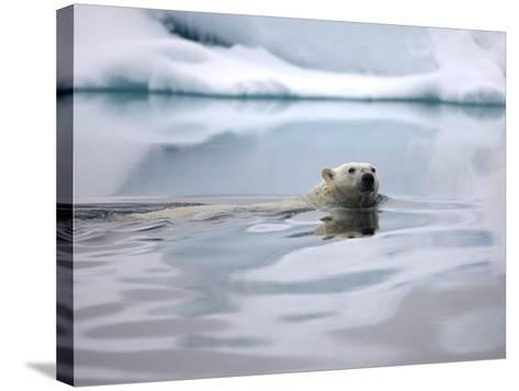 Polar Bear Swimming in Svalbard Islands-Paul Souders-Stretched Canvas Print