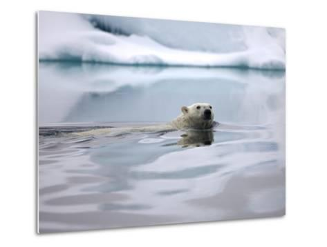 Polar Bear Swimming in Svalbard Islands-Paul Souders-Metal Print