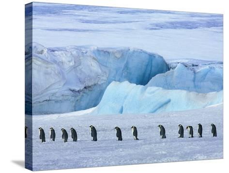 Emperor penguin group with iceberg-Frank Krahmer-Stretched Canvas Print