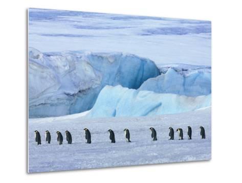 Emperor penguin group with iceberg-Frank Krahmer-Metal Print