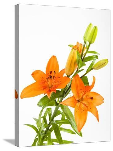 Orange lilies-Frank Lukasseck-Stretched Canvas Print