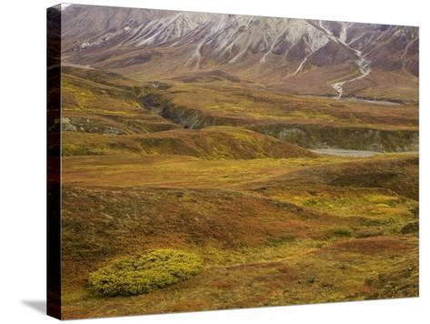 Fall colors on the tundra in Denali National Park-John Eastcott & Yva Momatiuk-Stretched Canvas Print