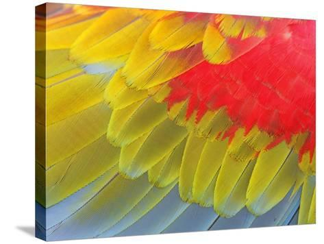 Feathers of a Scarlet Macaw-Arthur Morris-Stretched Canvas Print