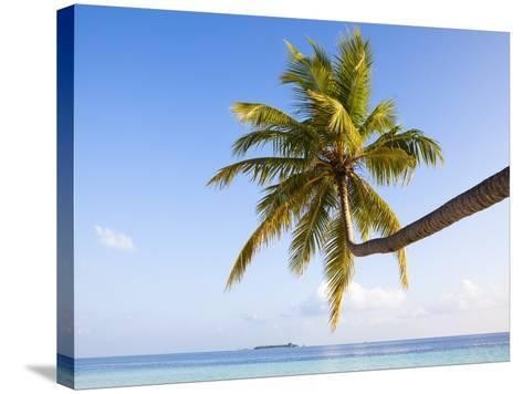 Coconut palm tree by the lagoon-Frank Lukasseck-Stretched Canvas Print
