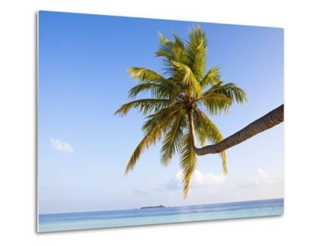 Coconut palm tree by the lagoon-Frank Lukasseck-Metal Print