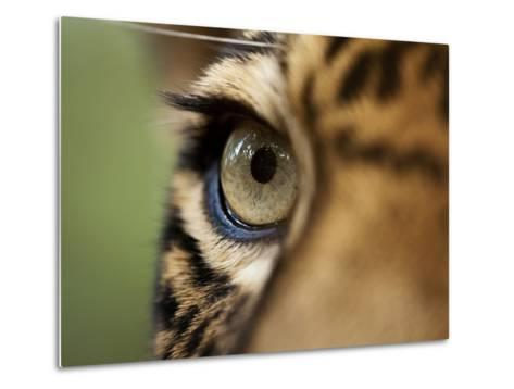 Captive Jaguar at Las Pumas Rescue Shelter-Paul Souders-Metal Print