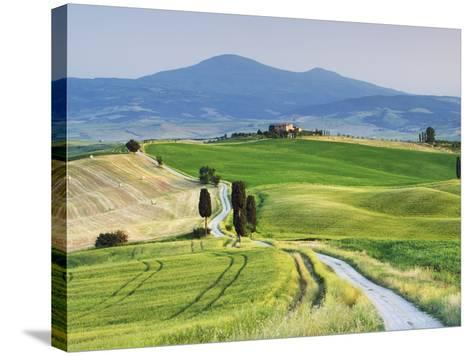 Rural Road Through Corn Fields and Cypress Trees-Frank Krahmer-Stretched Canvas Print