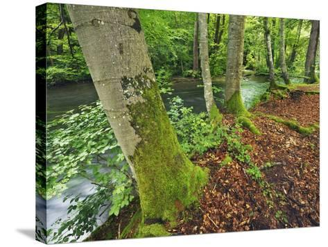 River and Beech trees-Frank Krahmer-Stretched Canvas Print
