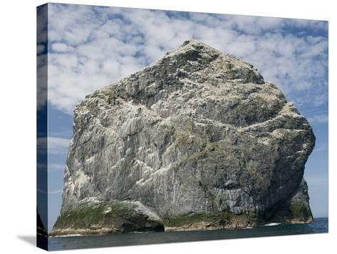 Northern gannet nesting colony atop Stac Lee-Kevin Schafer-Stretched Canvas Print