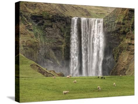 Skogarfoss with grazing sheep--Stretched Canvas Print